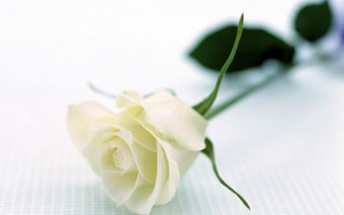 Begrafenisverzekering vergelijken
