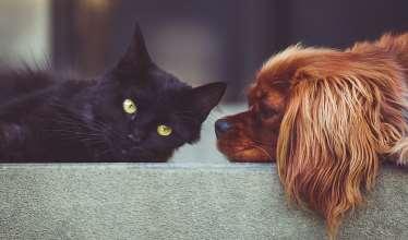 Dierenverzekering vergelijken