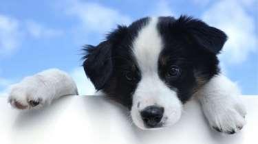 Hondenverzekeringen vergelijken